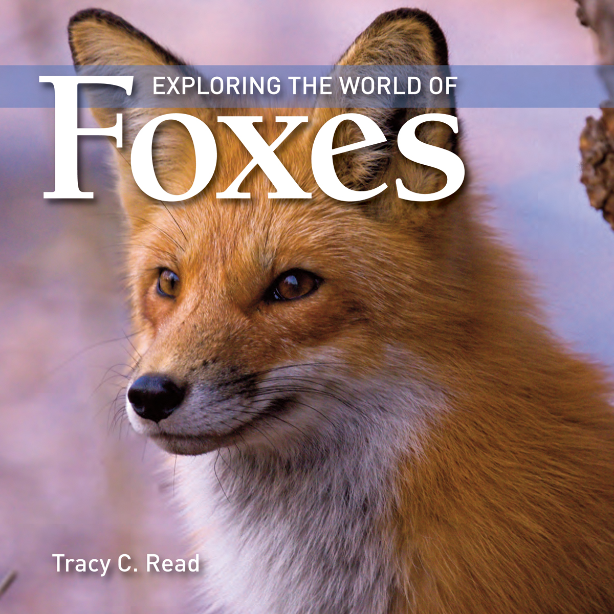 Exploring the World of Foxes | Documentary