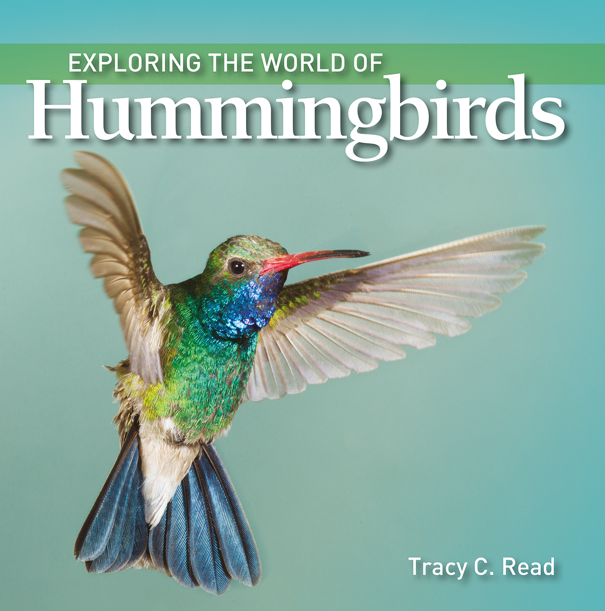 Exploring the World of Hummingbirds | Documentary