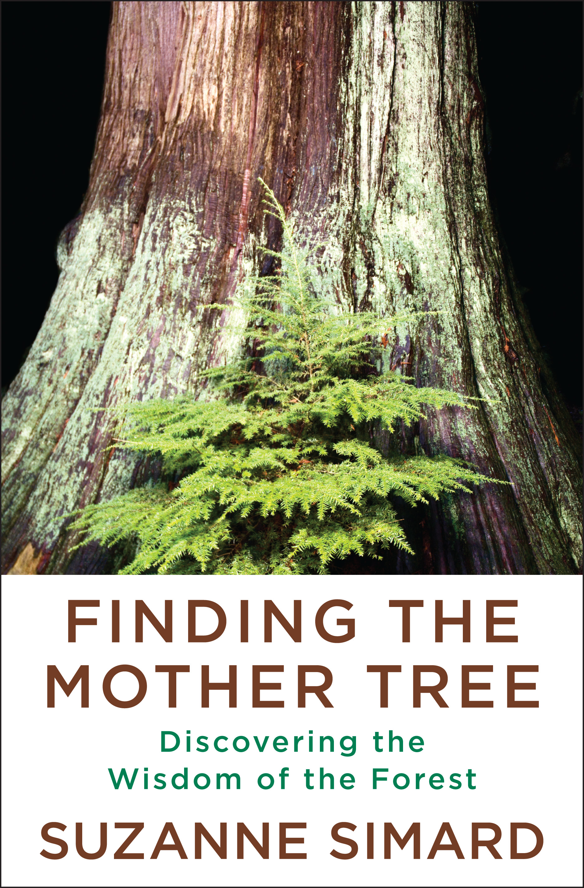 Finding the Mother Tree : Discovering the Wisdom of the Forest | Nature